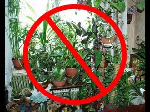 Какие растения опасно держать в квартире?