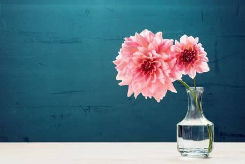 Водка оживляет цветы