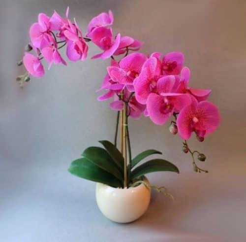 Правила ухода за орхидеями
