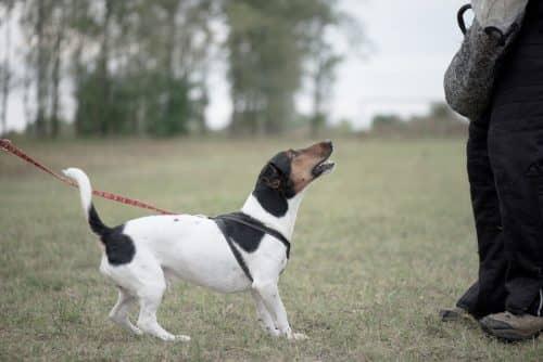 Защитный лай собаки