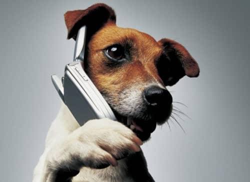 Как понять лай собаки?