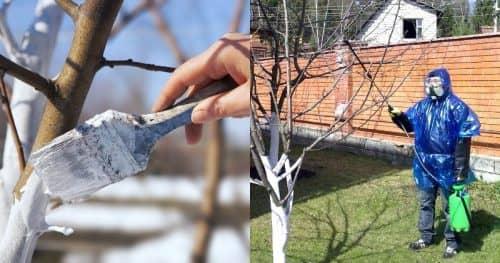 Обработка деревьев