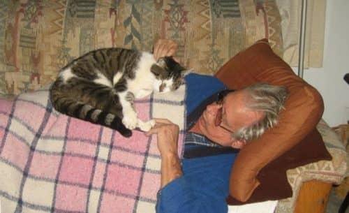 Кошки лечат суставы и кости