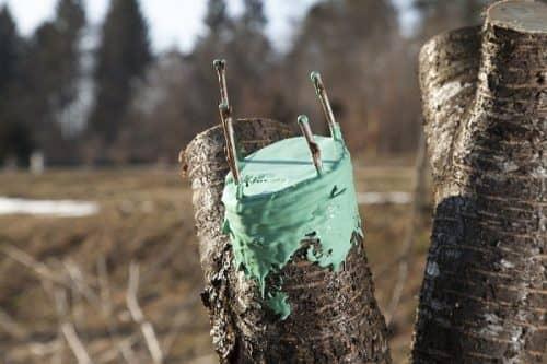 Как обрабатывать деревья весной