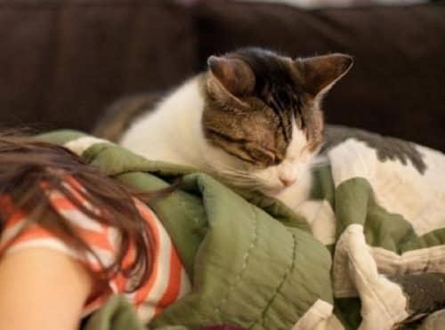 Как лечиться кошками
