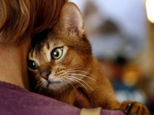 Кошки лечат болезни