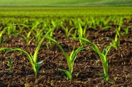 Как получить хороший урожай?