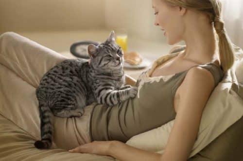 Кошки лечат пищеварительную систему