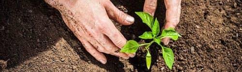 Правила высадки растений