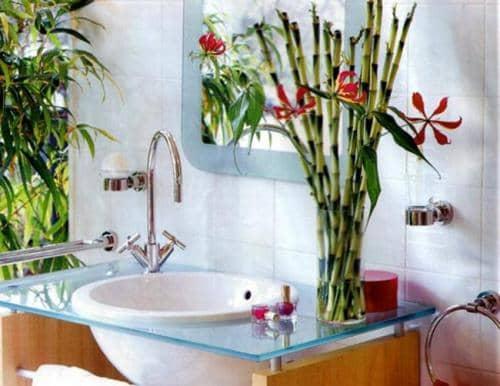 Идеальные растения для ванной комнаты